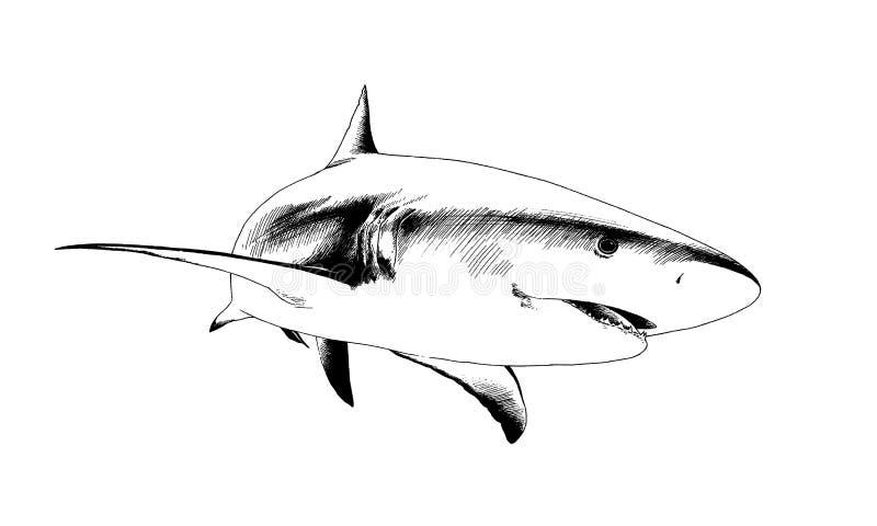 Haifisch Gezeichnet In Tinte Vektor Abbildung - Illustration von ...