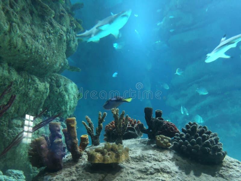 Haifisch im Meerwasser lizenzfreies stockbild