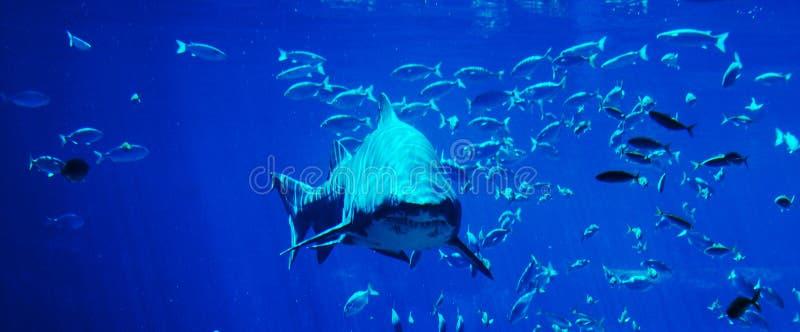 Haifischaufdeckung stockbilder