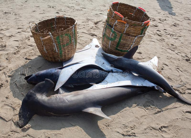 Haifische am Morgenmarkt in Kerala-Staat, Süd-Indien lizenzfreie stockfotografie
