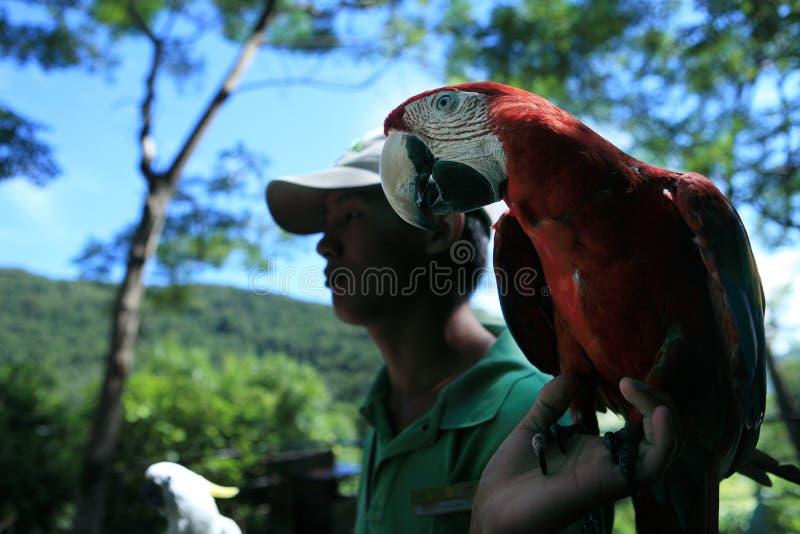 Hainan de la Chine oh, secteur de touristes de la forêt tropicale photographie stock libre de droits