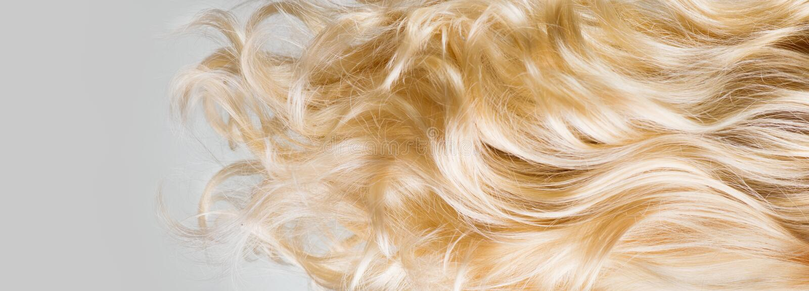 Hair. Beautiful healthy long curly blond hair closeup texture. Dyed wavy blonde hair background. Coloring. Haircare royalty free stock photography