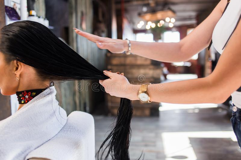 Hair care in modern spa salon. hairdresser woman applies a mask or oil on the hair royalty free stock image