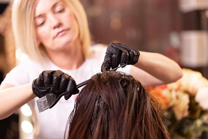 Hair coloring in the salon, hair styling. Professional wizard paints the hair in the salon. Beauty concept, hair care. royalty free stock image