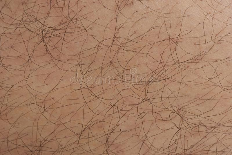 Hair come from human skin pores. Close up view royalty free stock image