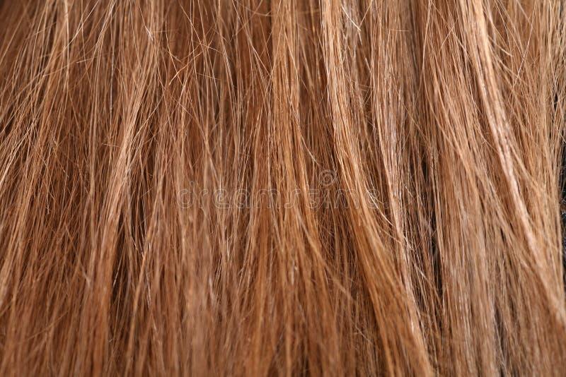 Hair Detail Stock Image