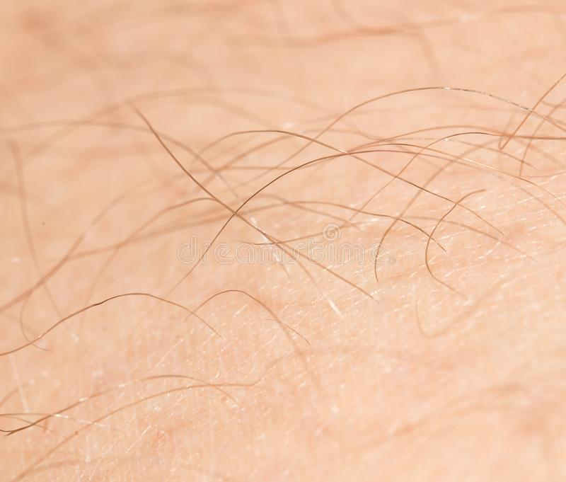The hair on the human skin.  royalty free stock photo