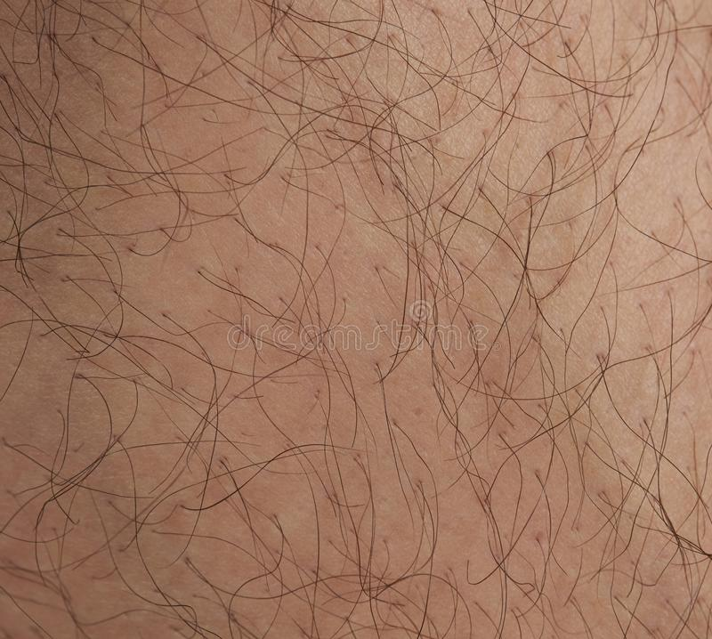 Hair on human skin. Hair cover human caucasian skin close up view stock image