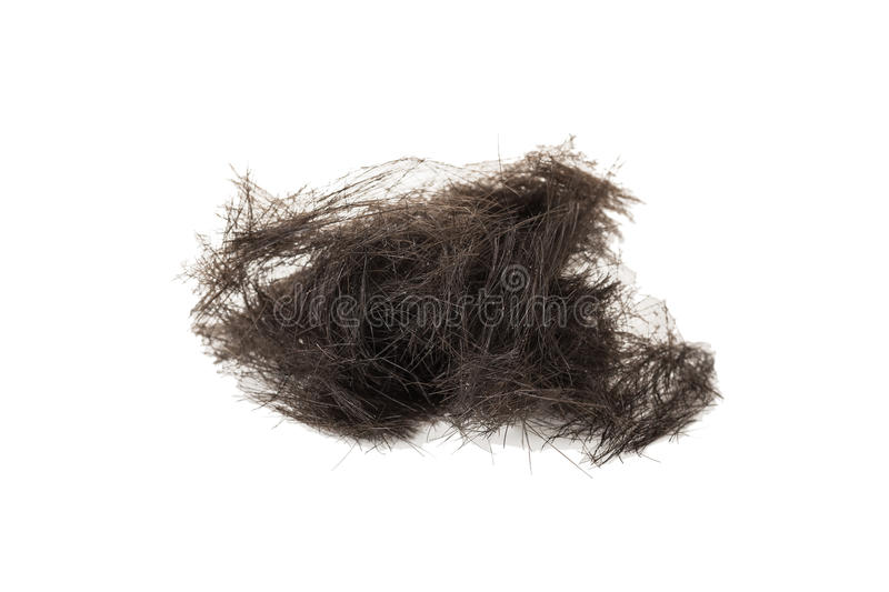 Download Hair stock image. Image of isolated, mess, hairloss, short - 49617031