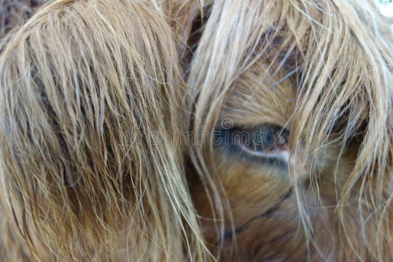 Hair In My Eyes stock image