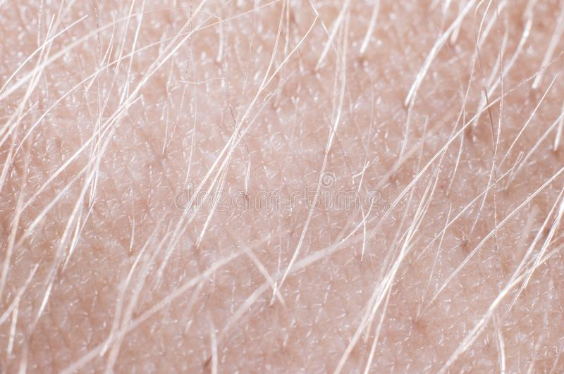 Hair with skin on a human hand close-up, macro shot.  stock images