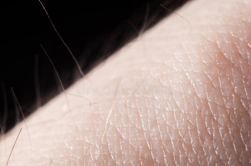 Hair with skin on a human hand close-up, macro shot.  royalty free stock image