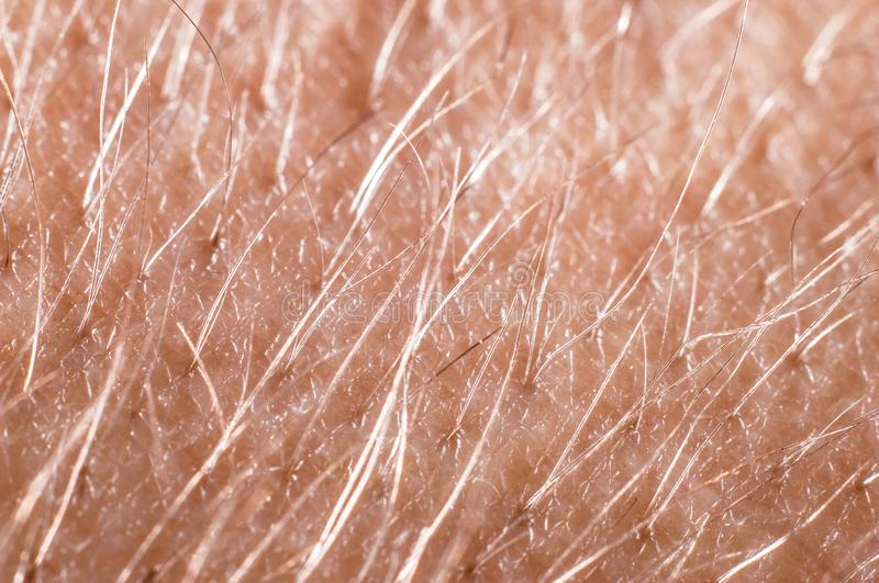 Hair with skin on a human hand close-up, macro shot.  stock image