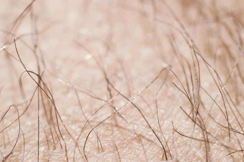 Hair with skin on the human leg close-up, macro.  royalty free stock photo