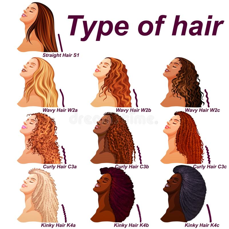 Hair types chart displaying all types and labeled vector illustration