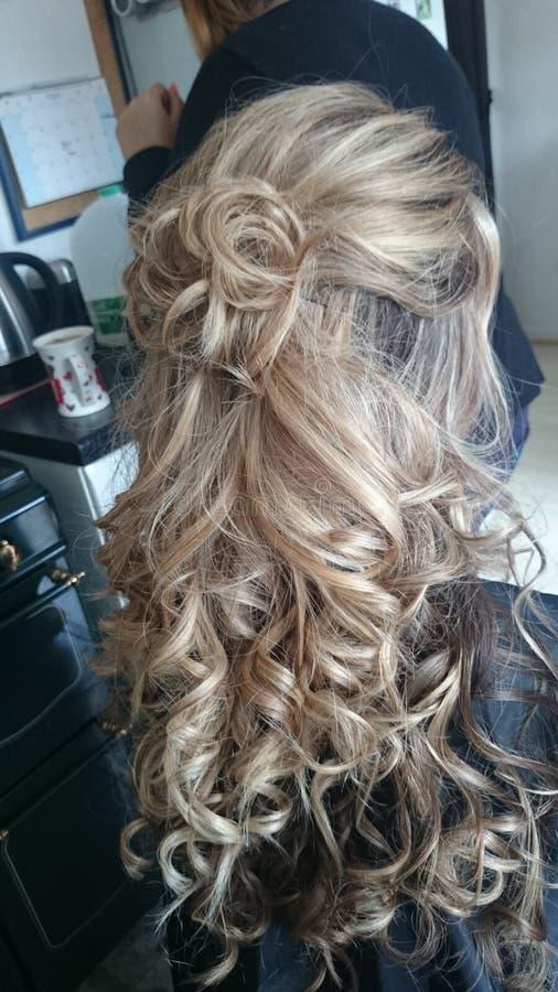 hairball fotografia stock