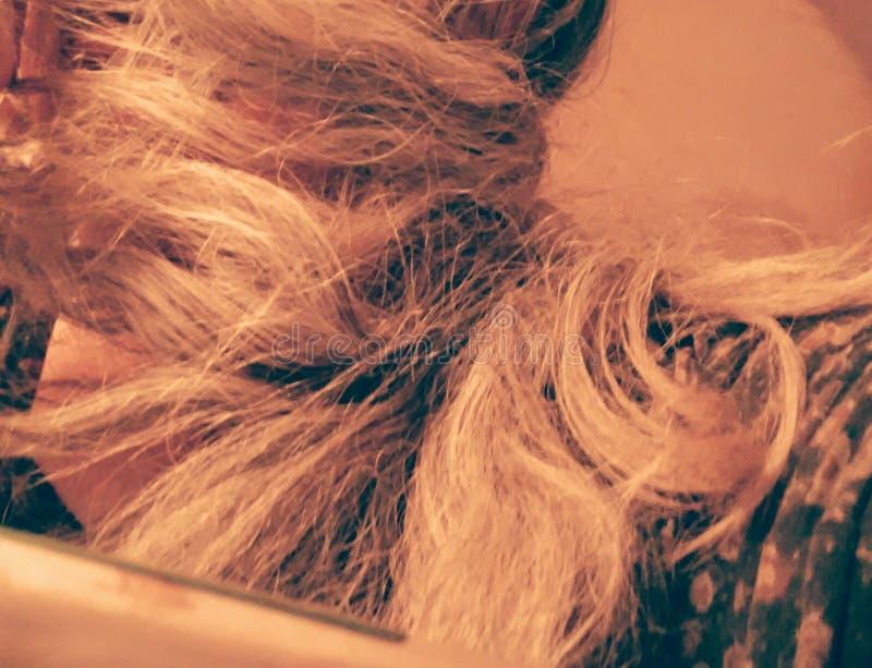 hairball fotografia royalty free