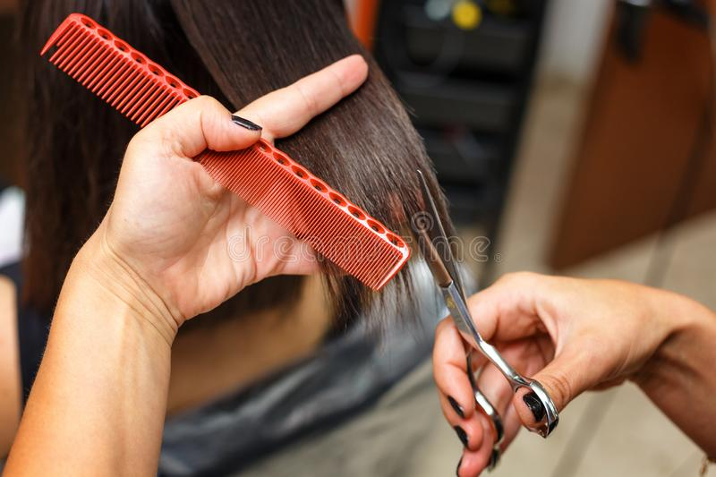 Haircut in the beauty salon, hair care royalty free stock image