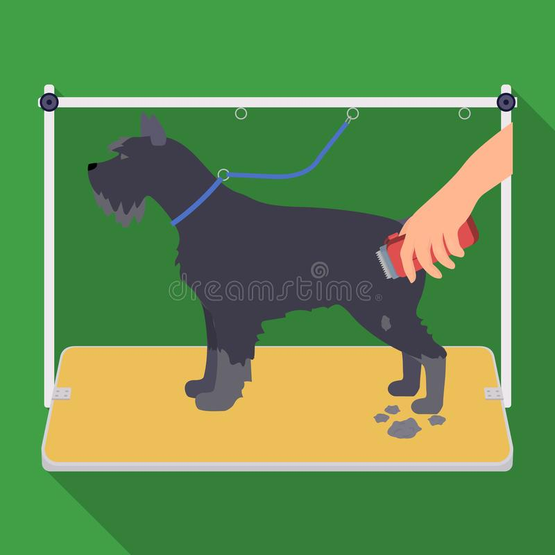 Haircut dogs in a stylish salon. Pet,dog care single icon in flat style vector symbol stock illustration web. Haircut dogs in a stylish salon. Pet ,dog care vector illustration