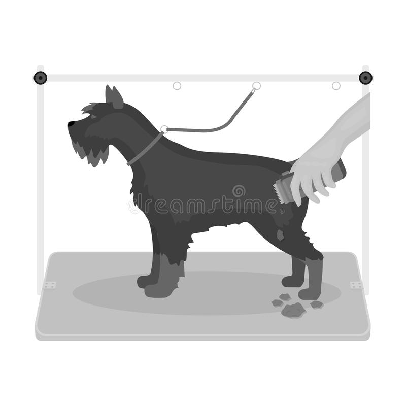 Haircut dogs in a stylish salon. Pet,dog care single icon in monochromt style vector symbol stock illustration web. Haircut dogs in a stylish salon. Pet ,dog vector illustration