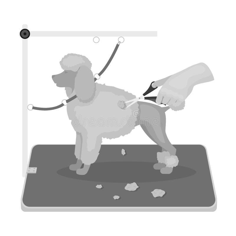 Haircut pet in a stylish salon. Pet,dog care single icon in monochromt style vector symbol stock illustration web. Haircut pet in a stylish salon. Pet,dog care stock illustration