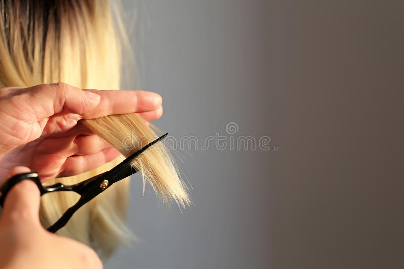 Hairdresser cuts the blonde hair. Woman hairdresser cuts the blonde hair, scissors in female hands close up royalty free stock image