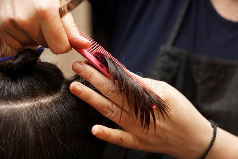 Hairdresser cuts hair. Hairdresser cuts dark hair with scissors royalty free stock photography