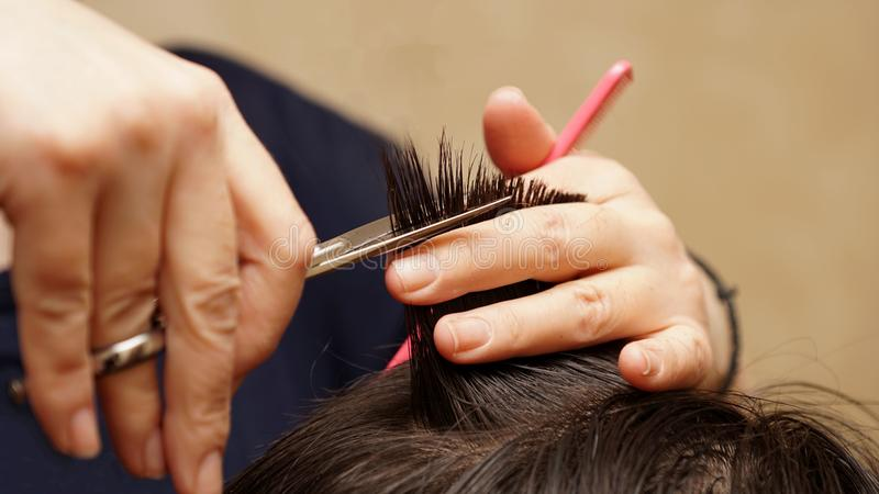 Hairdresser cuts hair stock photo