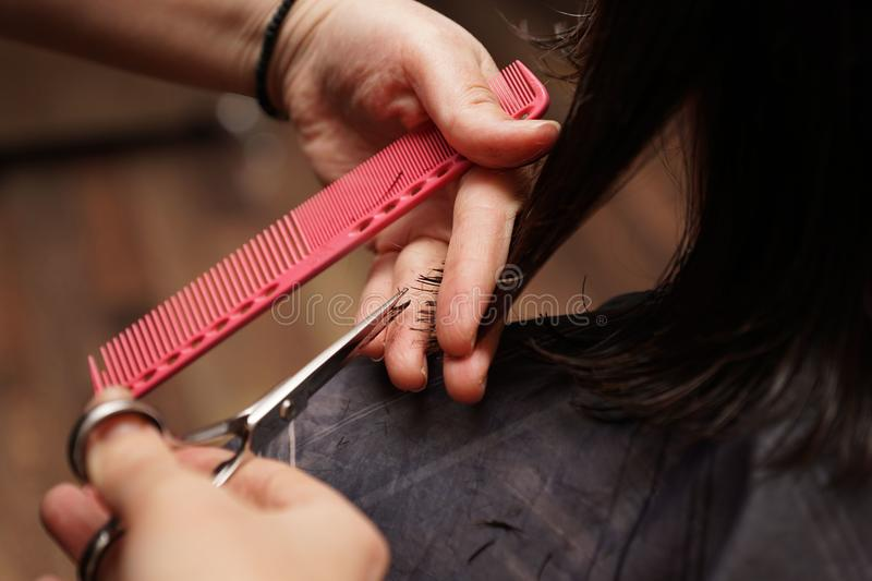 Hairdresser cuts hair. Hairdresser cuts her dark hair with scissors stock photography