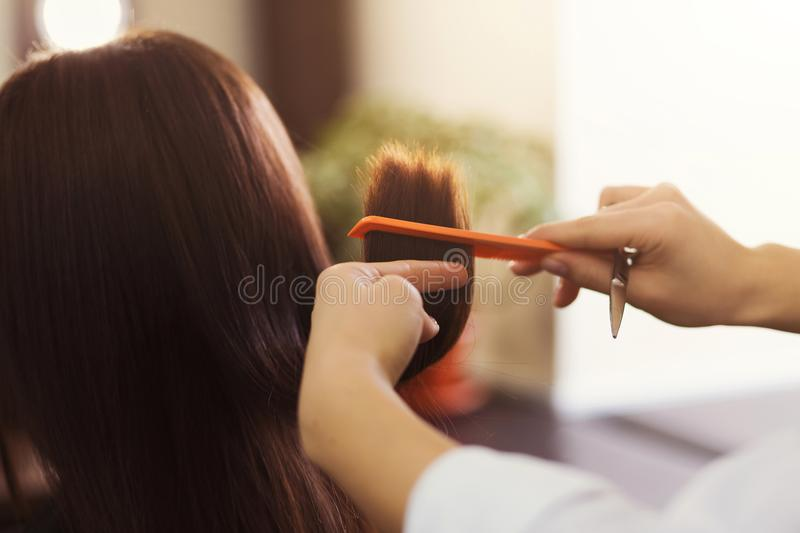 Hairdresser cutting brown hair with scissors stock photo