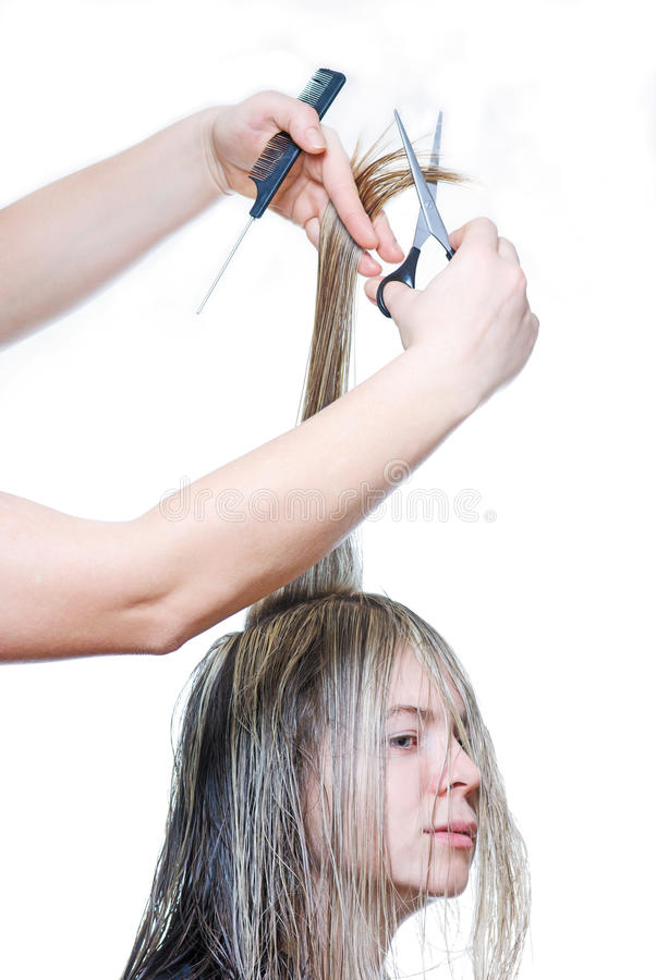Hairdresser cutting the hair royalty free stock photo