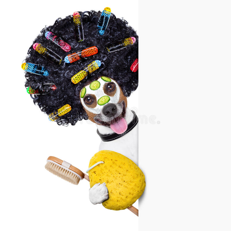 Hairdresser dog with curlers royalty free stock images