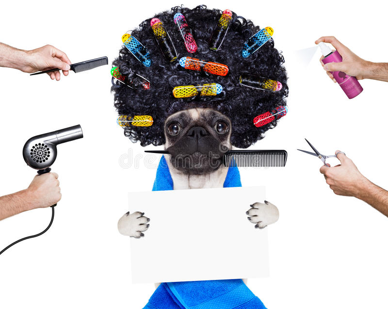 Hairdresser groomer dog stock photography