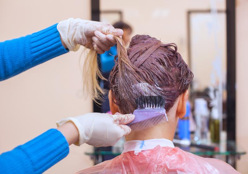 The hairdresser paints the woman`s hair in white, apply the paint to her hai stock images