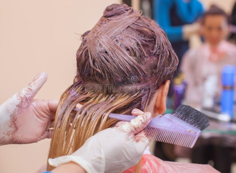 The hairdresser paints the woman`s hair in white, apply the paint to her hair royalty free stock image