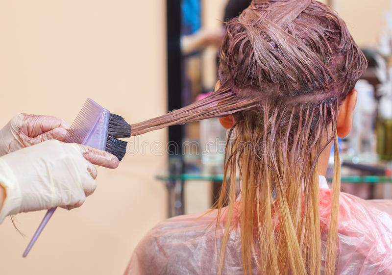 The hairdresser paints the woman`s hair in white, apply the paint to her hair royalty free stock photography