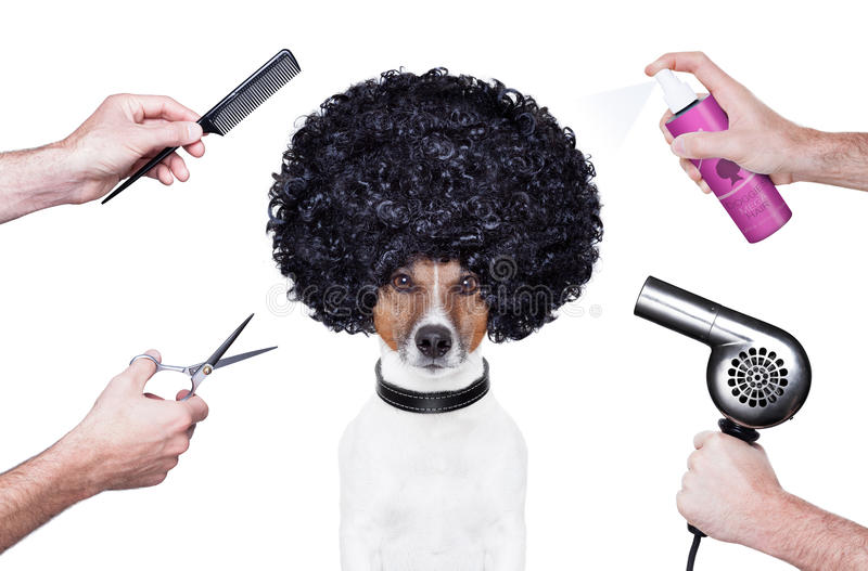 Hairdresser scissors comb dog spray stock images