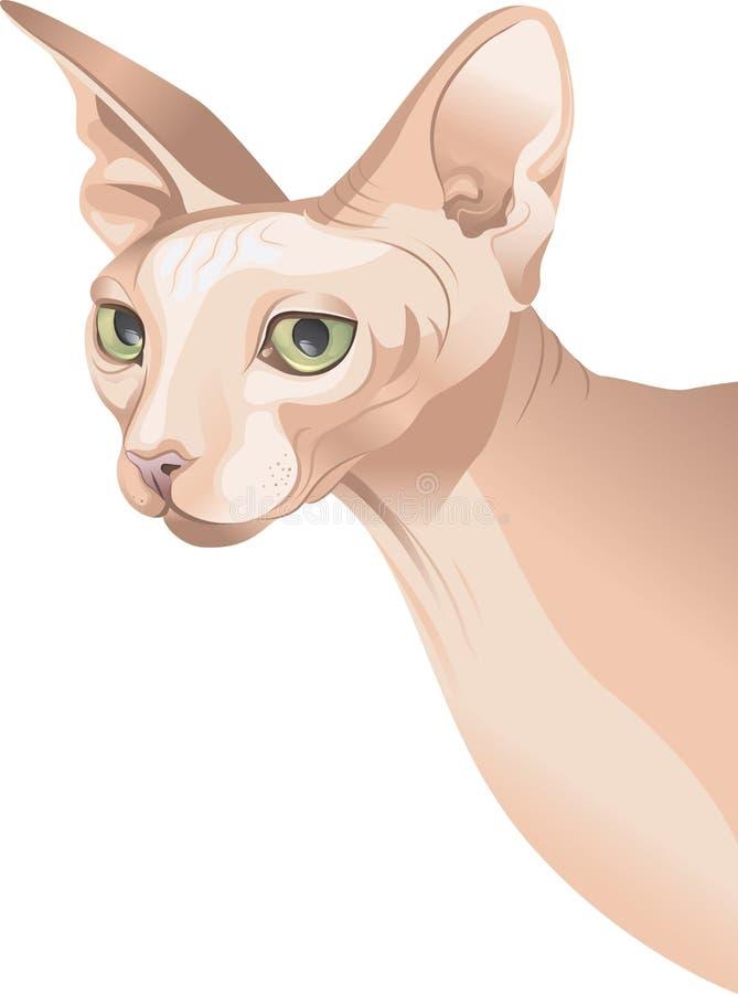Download Hairless cat stock illustration. Illustration of eyes - 19941596