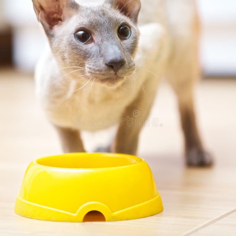 Free Hairless Cat Eating Stock Image - 23278171