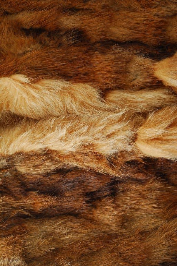 hairly zwierzęcy futerko obraz royalty free