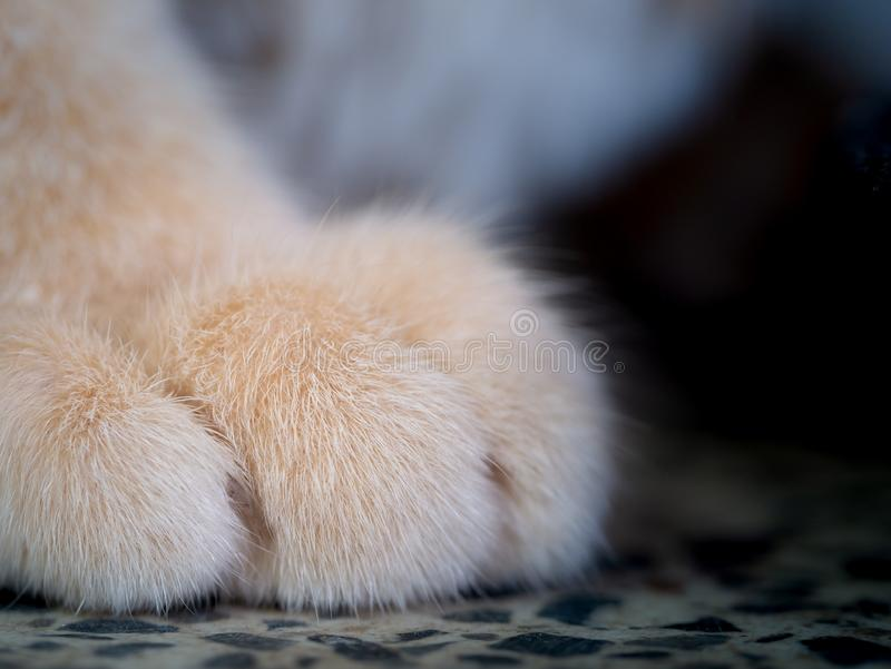 Hairs on The Feet of The Yellow Cat. The Hairs on The Feet of The Yellow Cat royalty free stock photography