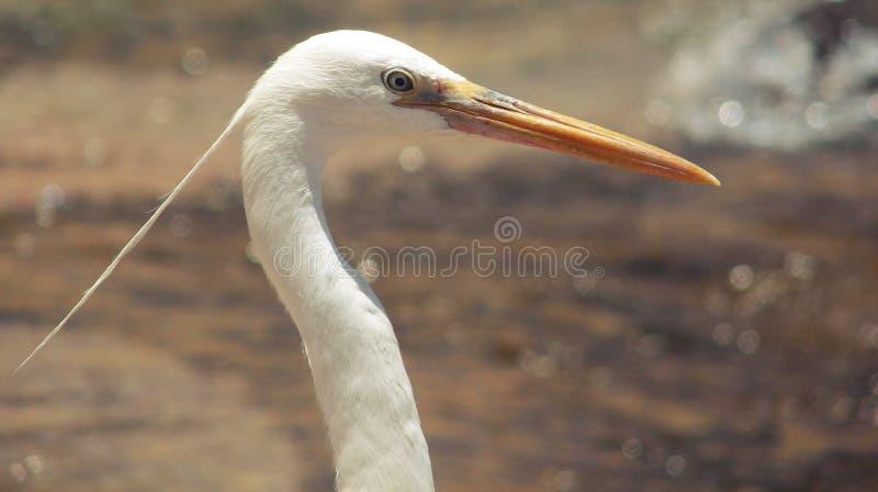 hairstyling heron s royaltyfri foto