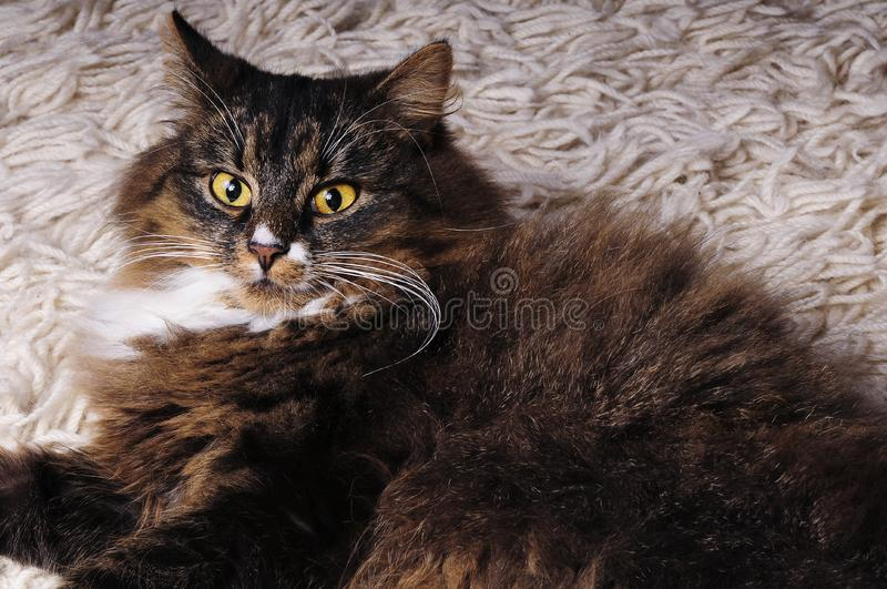 Download Hairy Cat stock image. Image of curious, head, friend - 8552499