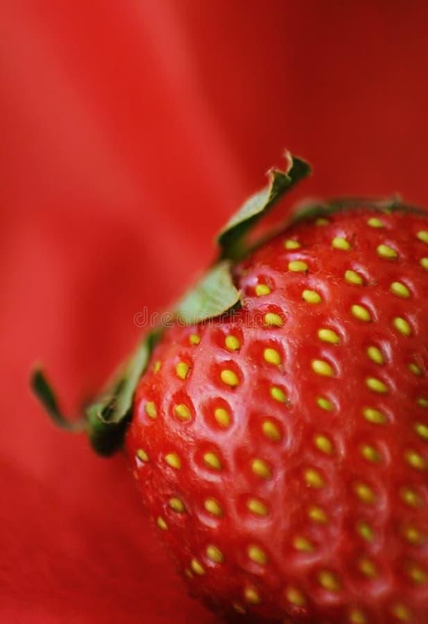 Hairy strawberry macro stock photo
