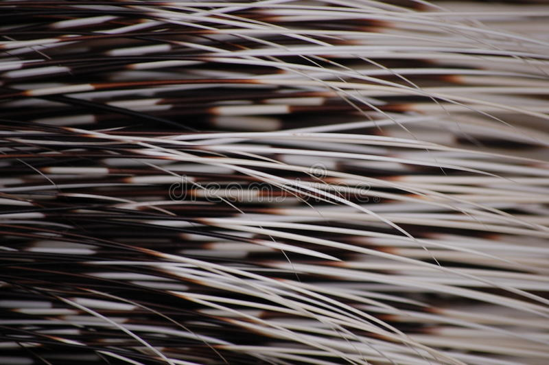 Hairy Structure Stock Photo