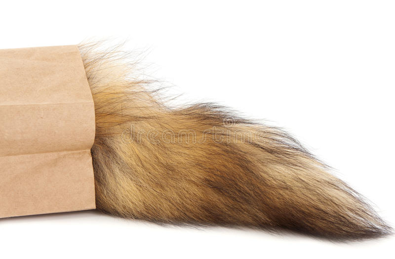 Hairy Tail In Paper Bag Stock Photos