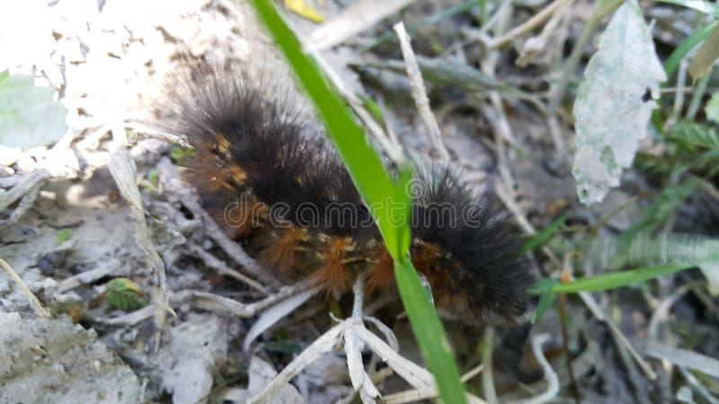 Hairy worm stock photo