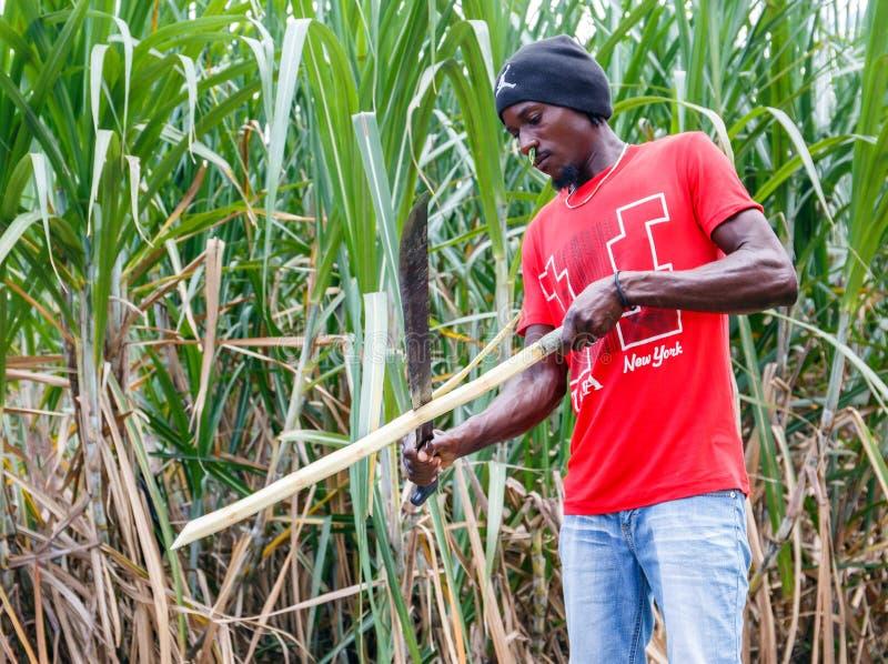 Haitian man on sugar cane plantation royalty free stock photos