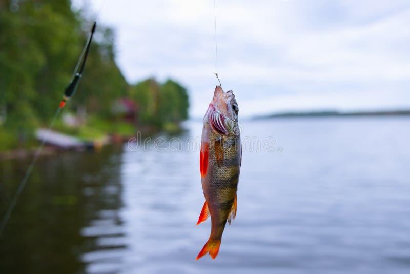 Hakad fisksittpinne royaltyfria foton