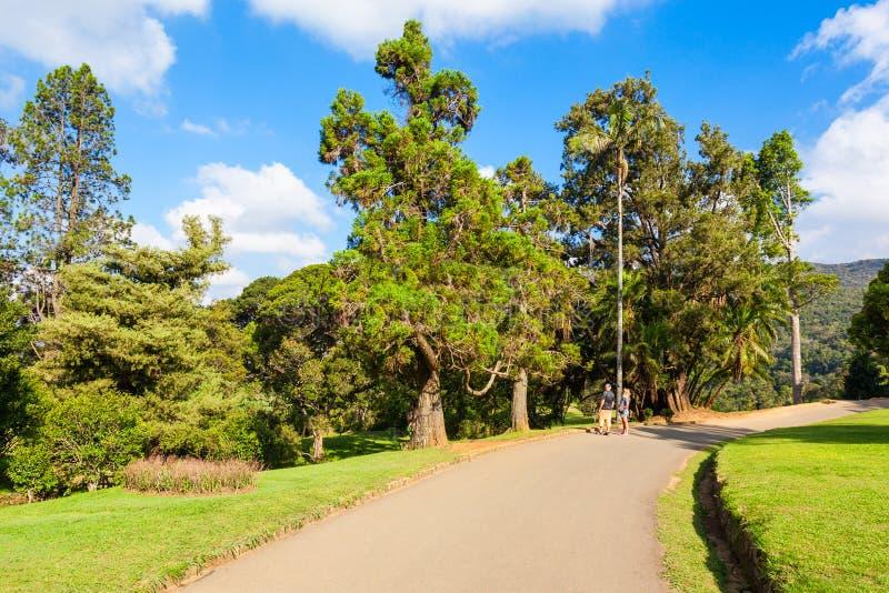 Hakgala植物园,努沃勒埃利耶 图库摄影